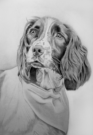"""""""Radley"""" by Del Barfoot on flickr"""